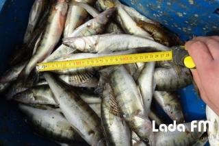 Інспектори рибоохорони вилучили у браконьєрів на Ладижинському водосховищі 251 кг. риби