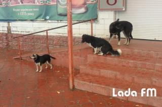 Міські депутати звернулись до уряду за дозволом на присипляння вуличних собак в Ладижині