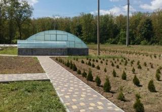 В теплиці Ладижинського лісництва вирощують 35 видів декоративних рослин
