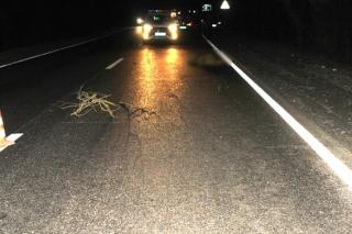 У Гайсинському районі під колесами автівки загинула жінка