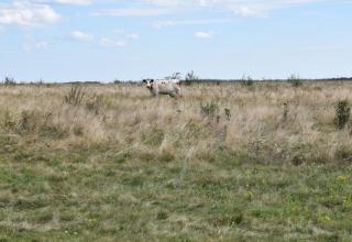 У Тростянці розпочали відновлювати місцевий аеродром